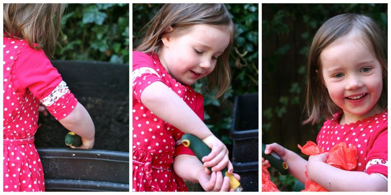 Little M harvesting wormcasts